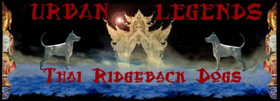 URBAN LEGENDS THAI RIDGEBACK DOGS